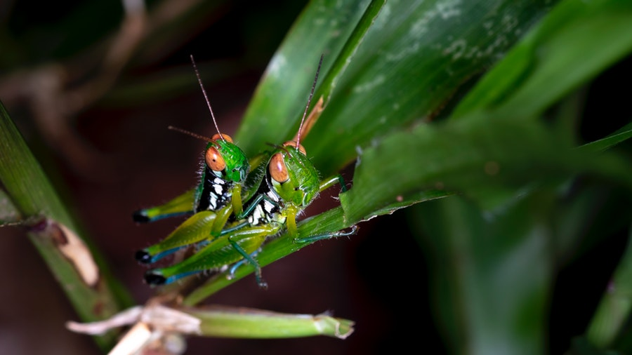 Are Insects Classified As Animals