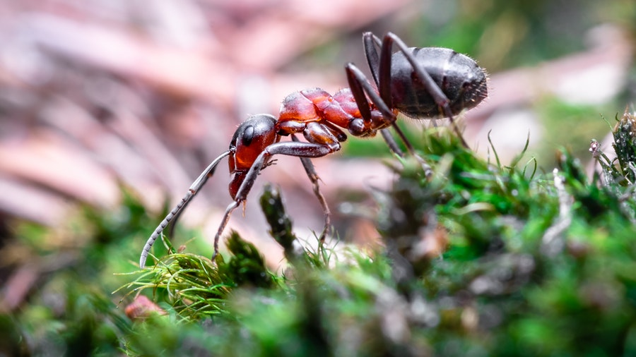 Do Ants Have Hearts