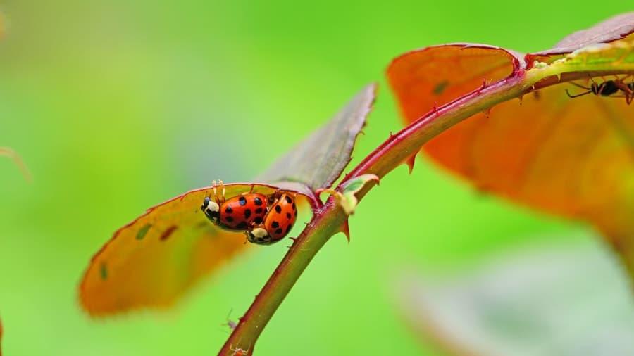 Do bugs feel pain