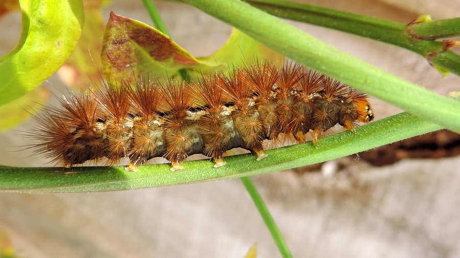 What Are The Common Insect Pests