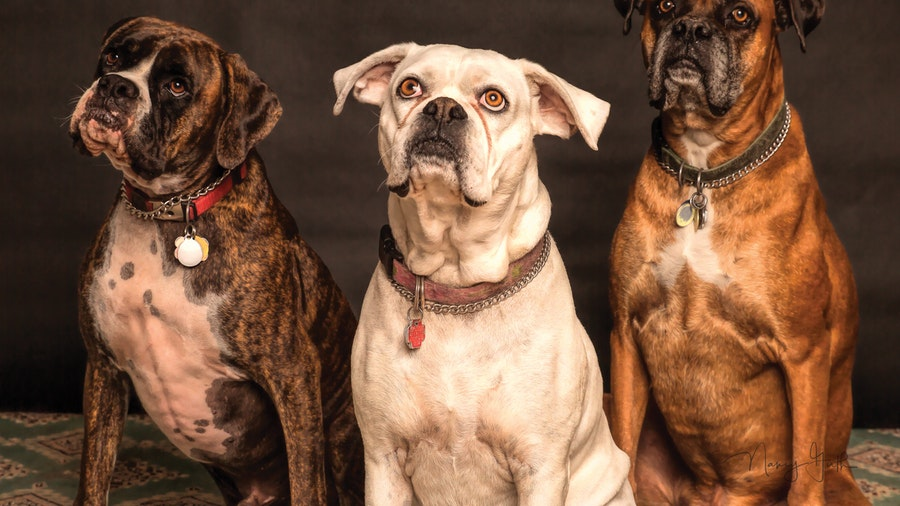 What Are The Common Parasites Found On Dogs