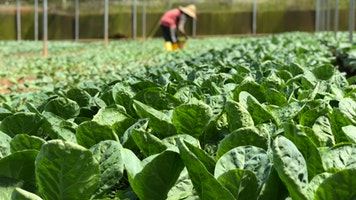 What are the Negative Effects of Pesticides?
