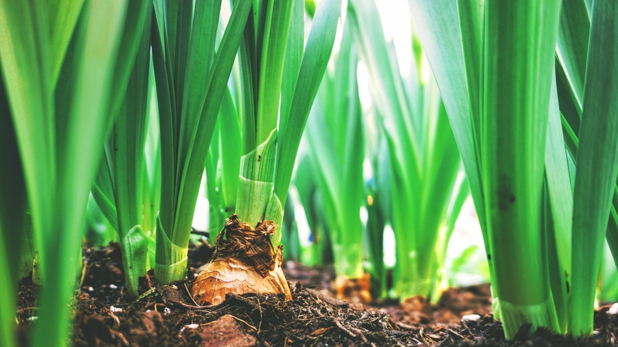 Effects on soil and crops