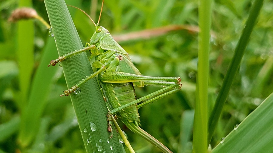 pests do harm people and plants