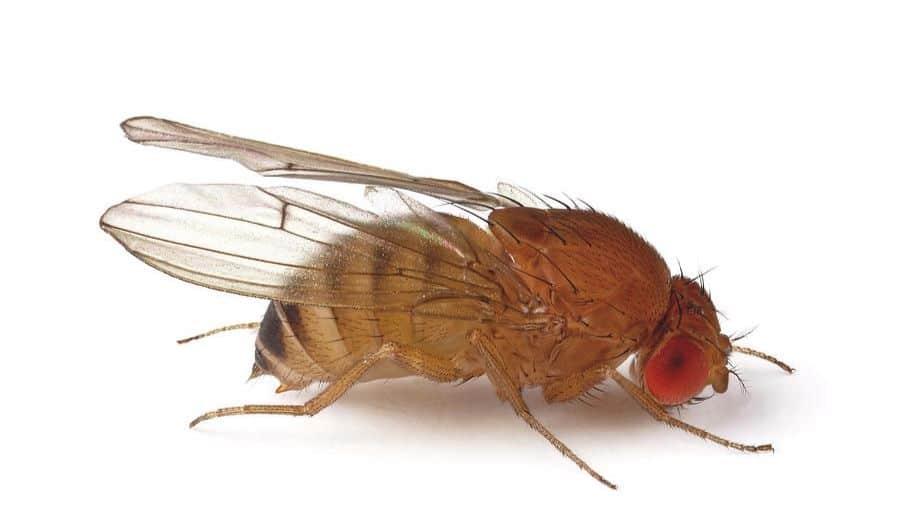 A test made on fruit flies