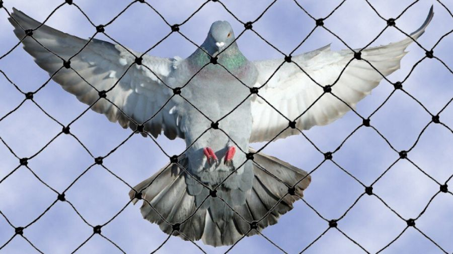 The most effective approaches to pigeon control include,
