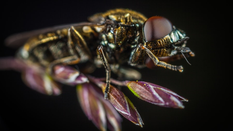 Can insects become pests