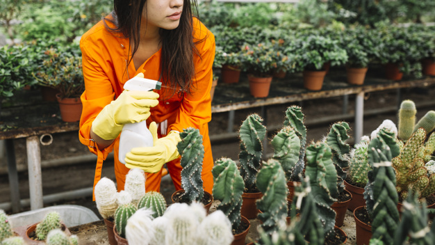 The Impact of Pesticides on Humans