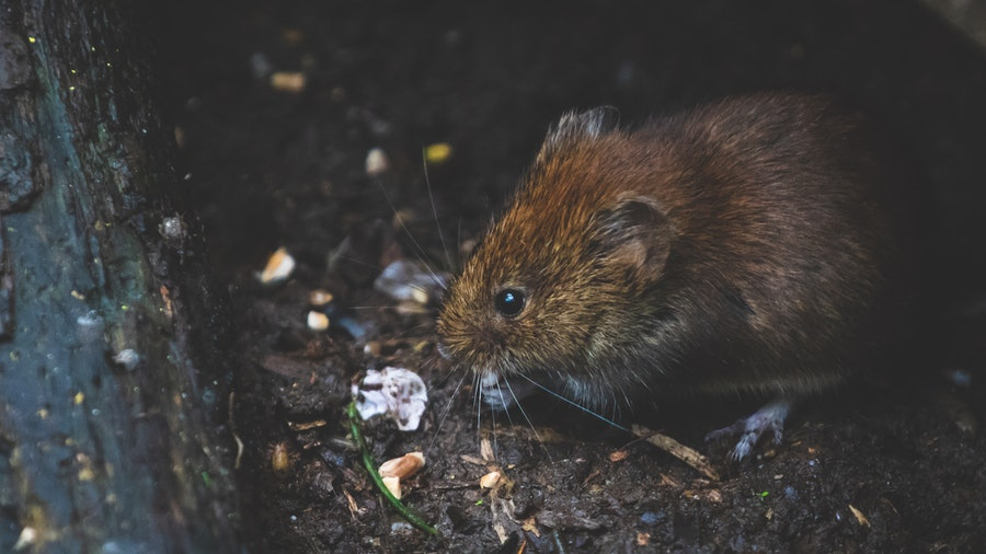 What-are-the-signs-of-a-rat-problem
