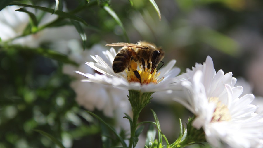 What-are-the-Three-'P's-When-it-Comes-to-the-Plants-for-Beneficial-Insects