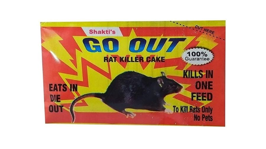 How-to-Get-Rid-of-Rats